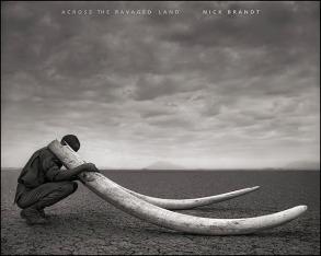 Ranger with Tusks of Killed Elephant